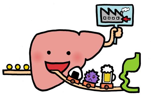 肝臓はアルコールの分解工場