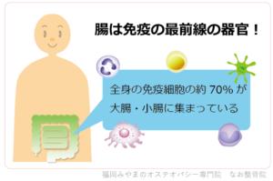 全身の免疫細胞の約70%が大腸・小腸に集まっている