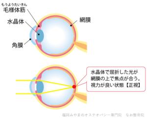 眼の構造と正視