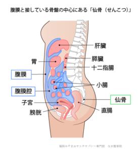 腹膜と接している骨盤の中心にある仙骨