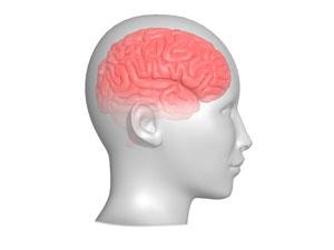 自閉症は脳の機能不全