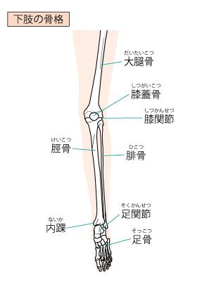 変形性膝関節症と脛骨
