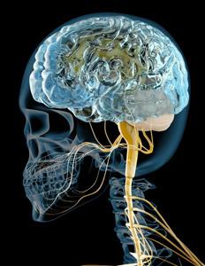 電磁波から赤ちゃんの脳を守ろう