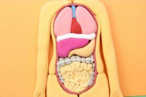 人体模型 粘土