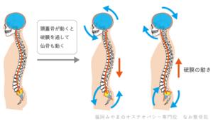 硬膜は脳に同調し一定のリズムで動く