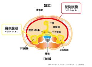 壁側腹膜 臓側腹膜 腸間膜