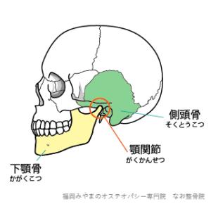 下顎骨 顎関節 側頭骨